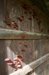 Growth, rubber fungi installation, 2011